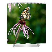 Monarched Coneflower Shower Curtain