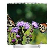 Monarchs And Blazing Star Shower Curtain