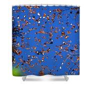 Monarchs Shower Curtain