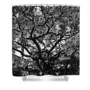 Monastery Tree Shower Curtain