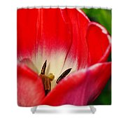 Monet Garden Red Tulip Shower Curtain