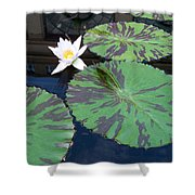 Monet Lilies White  Shower Curtain
