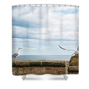 Monitored Seagull Take-off Shower Curtain