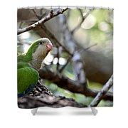 Monk Parrot Shower Curtain