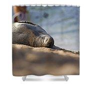 Monk Seal Basking. Shower Curtain