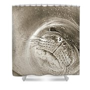 Monk Seal Shower Curtain