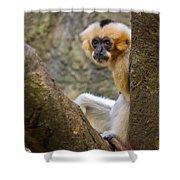 Monkey Chillin Shower Curtain