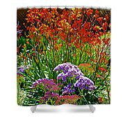 Yellow-orange Kangaroo Paws And Sea Lavender By Napier At Pilgrim Place In Claremont-california Shower Curtain