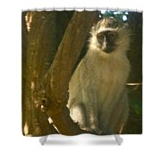 Monkey In The Tree Shower Curtain
