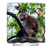 Monkey In Tree Shower Curtain