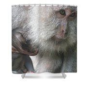 Monkey Mother 3 Shower Curtain