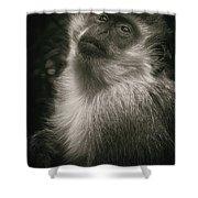 Monkey Portrait Shower Curtain