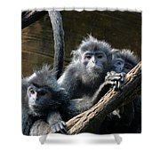 Monkey Trio Shower Curtain