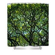 Monkeypod Canopy Shower Curtain