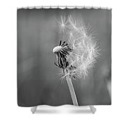 Monochrome Beauty Shower Curtain