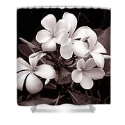 Monochrome Hawaii No. 3 Shower Curtain