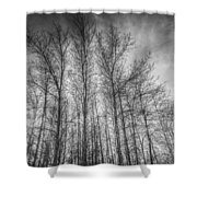 Monochrome Sunset Trees Shower Curtain