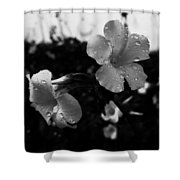 Monography Shower Curtain