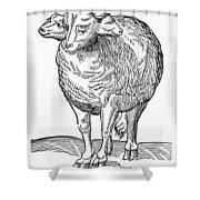 Monster, 16th Century Shower Curtain