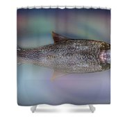 Monster Fish Shower Curtain