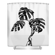 Monstera Leaf-black Shower Curtain