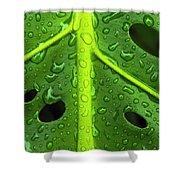 Monstera Rain Shower Curtain
