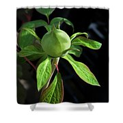 Monstrous Plant Bud Shower Curtain