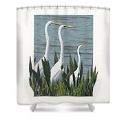 Montage With 3 Great White Egrets Shower Curtain