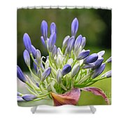 Montana Flower  Shower Curtain