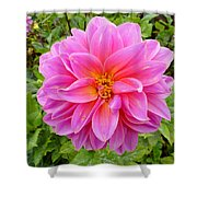 Monterey Pink Shower Curtain