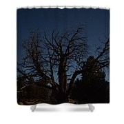 Moon Brings Life To An Old Tree Shower Curtain