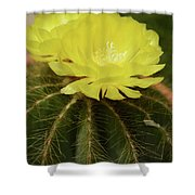 Moon Cactus Blooms Shower Curtain