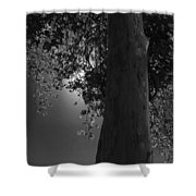 Moon Fall Shower Curtain