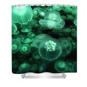Moon Jelly Aurelia Aurita Group Shower Curtain
