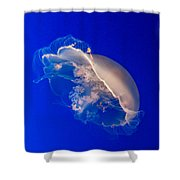 Moon Jelly Series #3 Shower Curtain