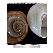 Moon Shells Shower Curtain