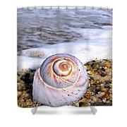 Moon Snail Shower Curtain
