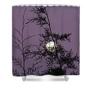 Moon Trees Shower Curtain