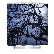 Moonlight And Oak Tree Shower Curtain