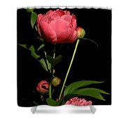 Moonlight Peony Watercolor Shower Curtain