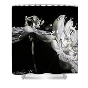 Moonlight Promenade - A Passion Fruit Production Shower Curtain