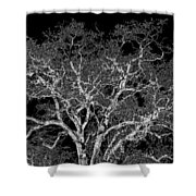 Moonlit Night Shower Curtain
