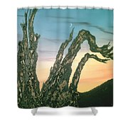 Moonset-bristlecone Pine Shower Curtain