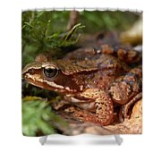 Moor Frog In September  Shower Curtain