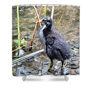 Moorhen Chick Shower Curtain