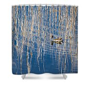 Moorhen In The Reeds Shower Curtain