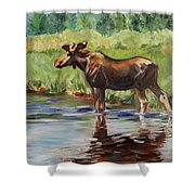 Moose At Henry's Fork Shower Curtain