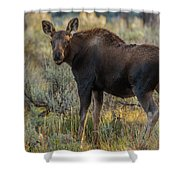 Moose Calf In Fall Colors Shower Curtain