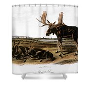 Moose Deer (cervus Alces) Shower Curtain by Granger