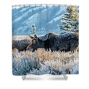 Moose In Cold Winter Ice Shower Curtain